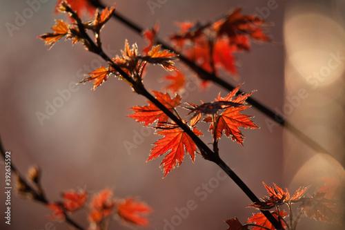 Fototapeta Autumn Time obraz
