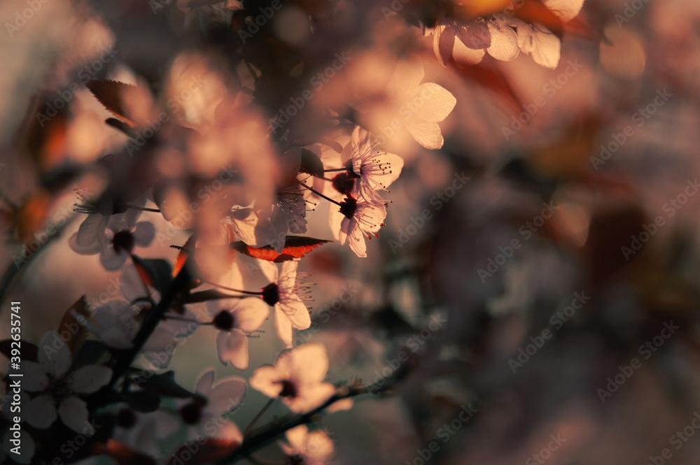Fototapeta Flower Buds