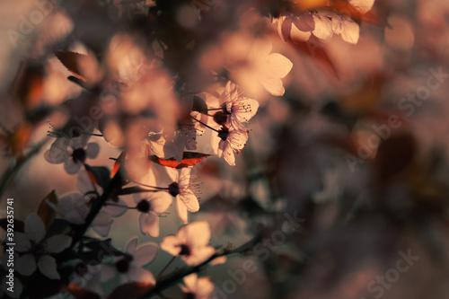 Obraz Flower Buds - fototapety do salonu