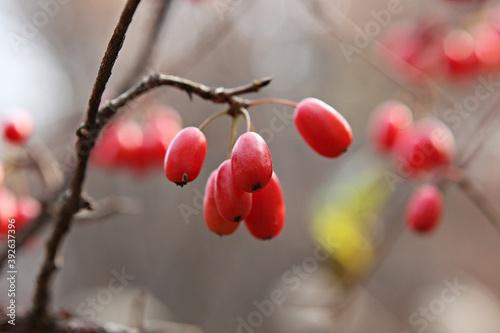 Fotografie, Tablou 한국가을공원의풍경입니다