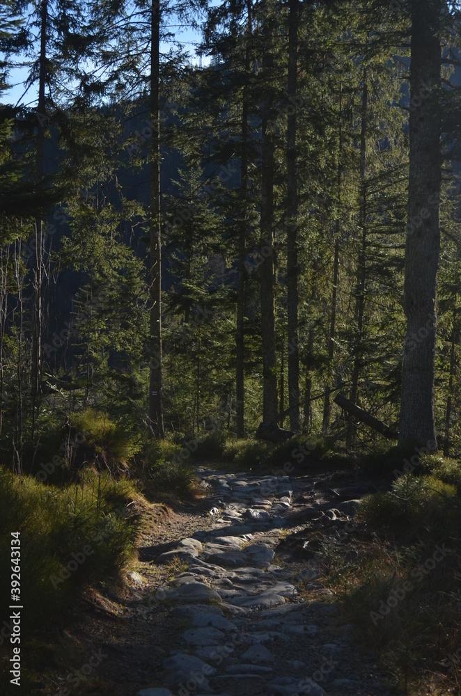 Fototapeta forest in autumn