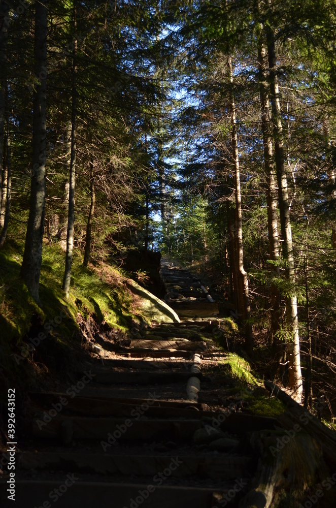 Fototapeta path in the forest