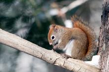 Squirrel Stock Photos. Squirre...