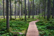 Wooden Boardwalk Trail In Green Forest