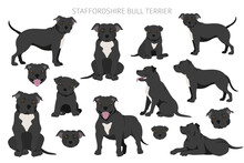 Staffordshire Bull Terrier In Different Poses. Staffy Characters Set