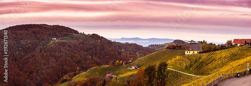 Tela Panorama of Vineyard on an Austrian countryside in Kitzeck im Sausal in autumn