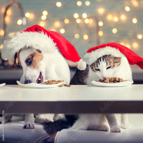 Obraz Dog and cat in christmas hat eating food - fototapety do salonu