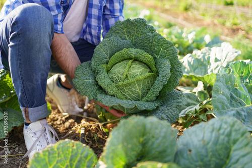 Pickled cabbage in the hands of a male farmer Tapéta, Fotótapéta