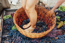 Doing Wine Ritual,Female Feet ...