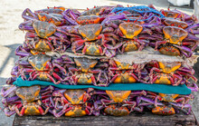 Ecuador, Near Guyaquil A Stack Of Fresh  Local Crab