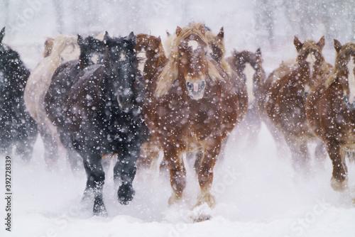 Tela 疾走する馬の集団