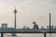 Selective Focus At Bird On Rai...