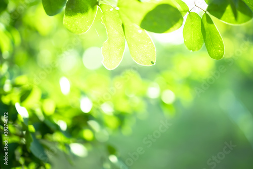 Canvas Print green blurred backdrop of nature, circle light wallpaper, white bokeh background