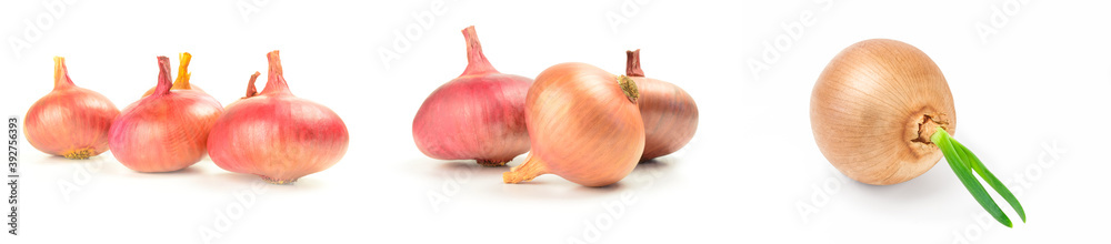 Fototapeta Group of Onion isolated on a white background cutout