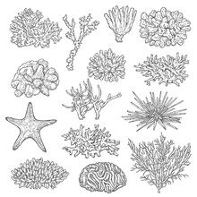 Sea Corals Colonies And Starfish Sketch Vectors. Marine Fauna, Ocean Depth And Seabed Reef Life, Stars And Sea Urchin Species. Black And Stellar, Acropora, Finger And Gorgonian Corals Polyps Vector
