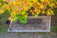 Brown And Yellow Leaves Of A Chestnut Tree In Autumn And A Bench Seen From Above.