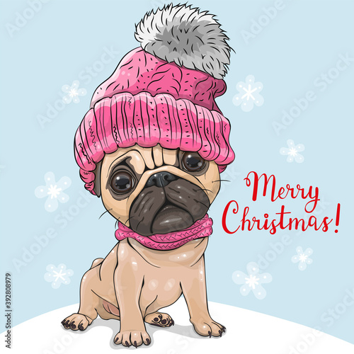 Cartoon Pug Dog in a pink hat and scarf