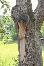Verletzung An Der Rinde Einen Birnbaums
