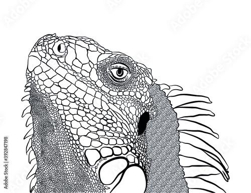 iguana lizard tropic reptile creature head face Billede på lærred
