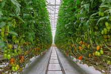 Industrial Greenhouse To Grow ...