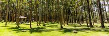 Anse Des Cascades Palm And Coc...