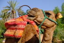Morocco Marrakesh - Portrait P...