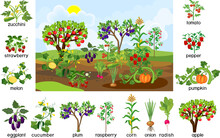 Harvest Time. Landscape With Vegetable Garden. Puzzle With Different Vegetable And Fruit Agricultural Plants With Ripe Harvest And Titles Isolated On White Background