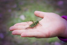 Small Green Grasshopper Sits O...