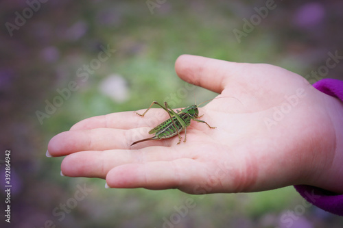Small green grasshopper sits on a female palm Wallpaper Mural