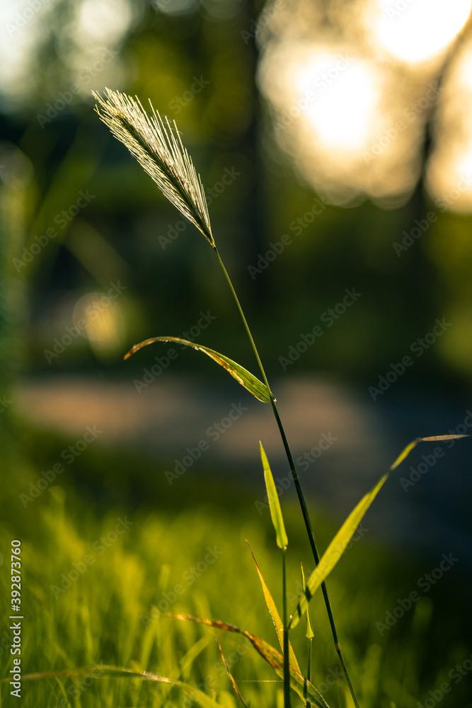 Fototapeta Natura z bliska