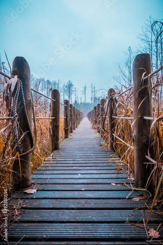 Vászonkép a wooden footbridge stretched between the autumn swamps on a gloomy day