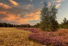 The Nature Reserve Maasduinen ...