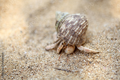 Kelomang or Umang-Umang (pompong), or some who translate it as hermit crabs or h Fototapet