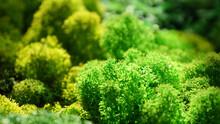 Multicolored Stabilized Moss F...