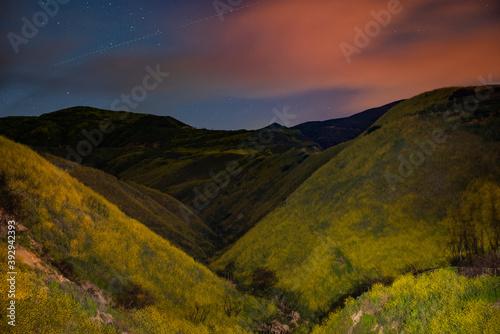 Tela City lights illuminate a flower filled hillside in California