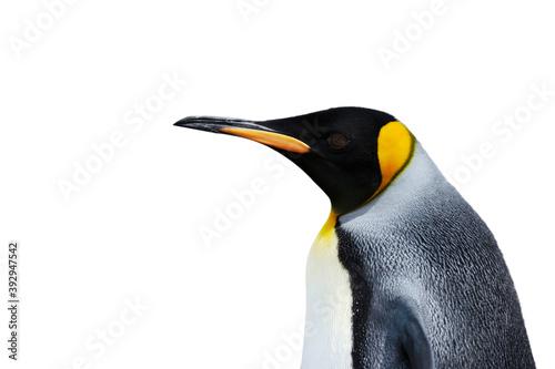 Fototapety, obrazy: King Penguin against white background