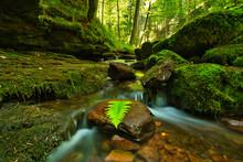 Black Forrest Waterfalls