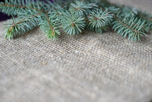 Green Spruce Branch On A Gray Mat. Rough Burlap And Spruce Paw. Copy Space