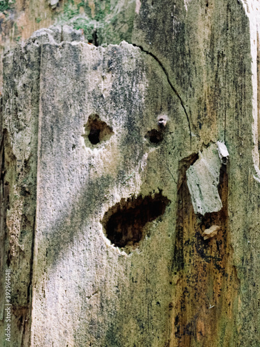Photo Tree trunk with eyes and mouth that looks like a human face, ghost