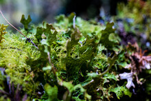 Detail Of Plant And Moss Growt...
