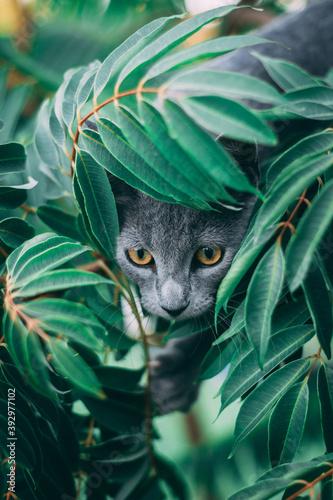 Vászonkép Retrato de un hermoso gato cazando desde las ramas de un arbol