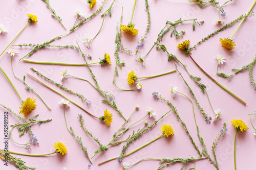 Fotografering set of wildflowers, purple lavender, yellow dandelions and small white daisies on a pastel pink background, wildflowers patern top view, flat flay