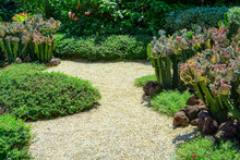 Cactus Garden With Cactuses, Agave, Brown Sand Stone, Green Leaf  Plant And Shrubs