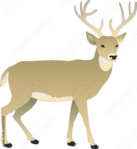 Fotografie, Tablou Illustration of a deer