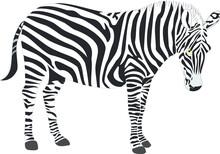 Illustration Of A Zebra