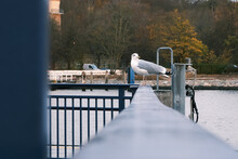 Big Seagull Stands On A Railin...