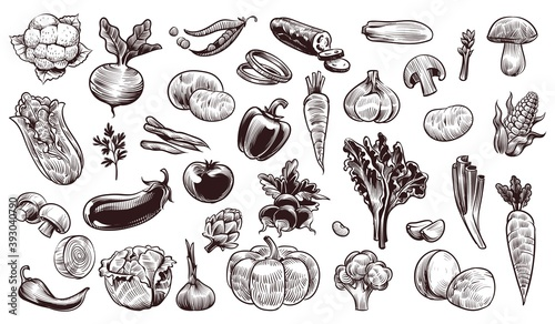 Vegetables sketch Tapéta, Fotótapéta
