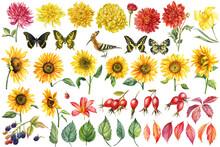 Set Of Watercolor Bright Flowers, Dahlias, Sunflowers, Lilies, Blackberries, Autumn Leaves, Butterflies, Bird.