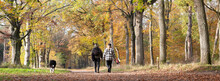 Couple And Dog In Autumn Fores...