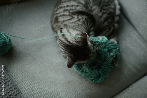 Fotografija a cat playing with a skein of yarn in green color